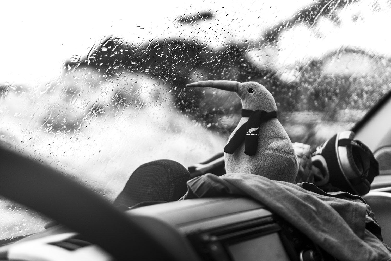 Kiwi e la pioggia